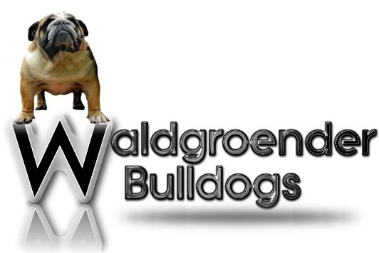 Waldgroender Bulldogs Logo